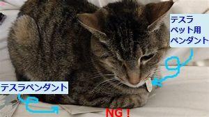 テスラペンダントは猫のエネルギーを読み取ろうとする