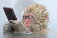 スマホ猿.jpg