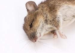 倒れたマウス.jpg