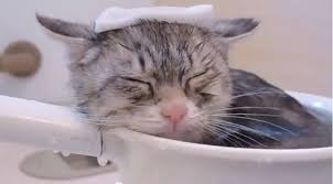 猫湯.jpg
