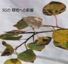 5G plant.jpg