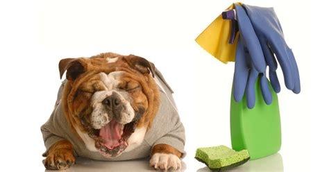 toxic dog.jpg